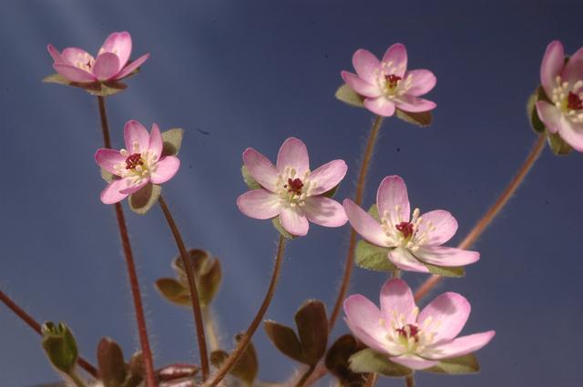 覆輪タイプ標準花