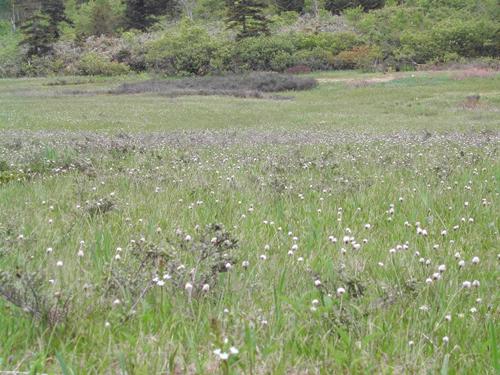 大ダルミの湿原